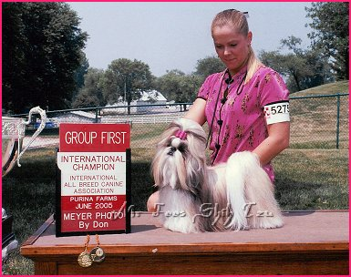 Image:Mr. Foos Autumn Fire. Our 1st home bred Champion shih tzu winning her International Championship