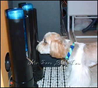 Image:Shih tzu, Dream drinking out of pet water bottle stand pekeatazrescu.